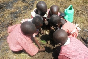 nursery pupils planting 5