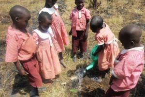 nursery pupils planting 6