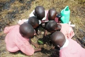 nursery pupils planting 2