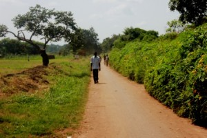 road to willacic primary