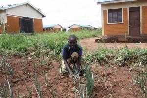 Boniface weeding onions