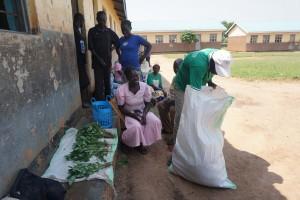 Customer at Lujoro examines garden peas